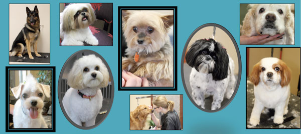 Dogs groomed at Wags 'n Whiskers