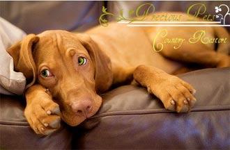 Precious Pets puppy