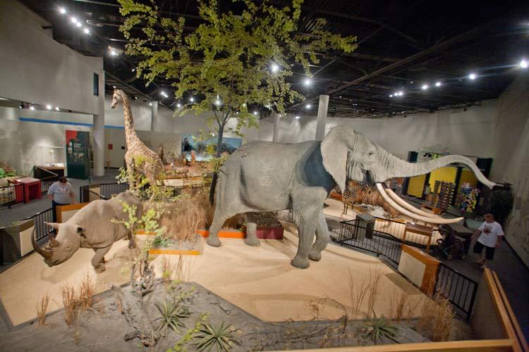 Foyer Museum Zoo : Great plains zoo delbridge museum of natural history